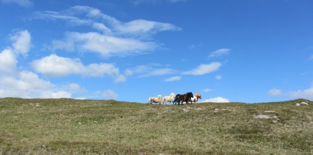 Ponies_in_Irland