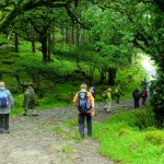Wandern in Irland mit Wanderlust - Killarney National Park