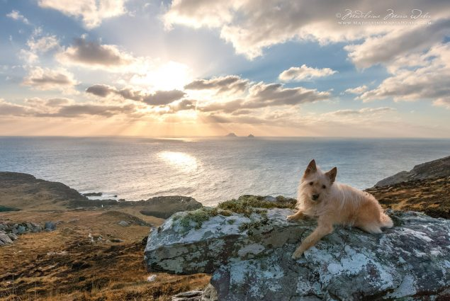 Magical Skellig Sunset with Juni, County Kerry, Ireland